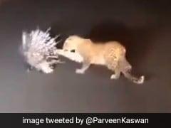 Highway पर हुई तेंदुए की ऐसी जंग, जानवर ने किया अटैक तो तड़पकर भागने लगा... देखें VIDEO