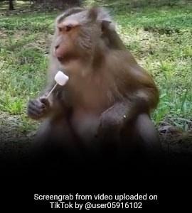 TikTok Top 5: बंदर ने जबरदस्त अंदाज में खाई आइस्क्रीम, वायरल हुआ ये VIDEO