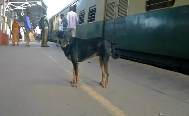 Abandoned Dog Barks At Those Flouting Rules At Chennai's Railway Station