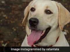 Ratan Tata Wants To Find This Abandoned Dog A Family