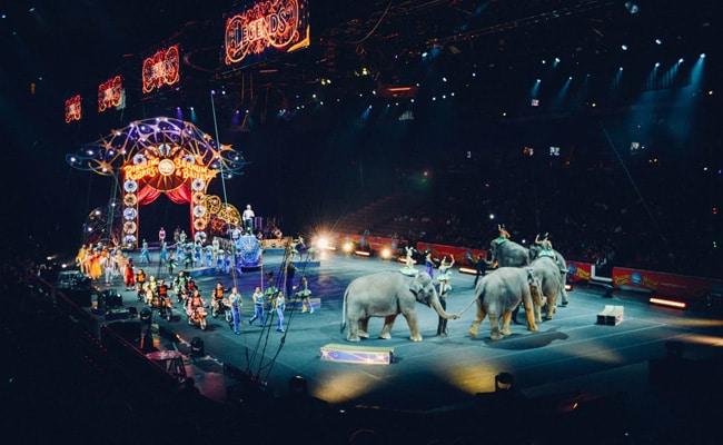 Paris Bans Use Of Wild Animals In Circuses