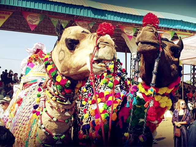 Video : Sponsored: The Camel Beauty Contest At The Pushkar Fair