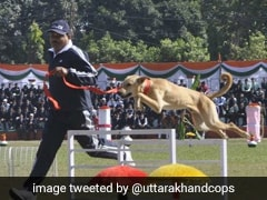 Stray Dog, Trained By Uttarakhand Police, Outperforms Other Breeds