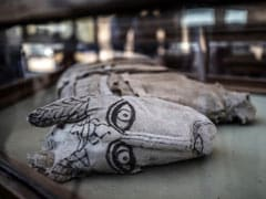 Mummified Lion Cubs, Cats, Crocodiles Unveiled In Egypt