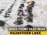 Video : Over 17,000 Birds Dead In Rajasthan, Ashok Gehlot Wants Wetland Authority Operational