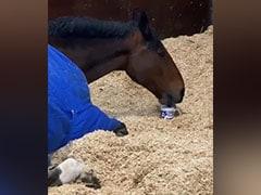 Video: बिना चाय पीए काम पर जाने को तैयार नहीं होता यह घोड़ा, बड़े से मग में भरकर पीता है Special Tea