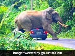 बीच सड़क चलती कार के ऊपर बैठ गया हाथी, घबराकर ड्राइवर ने किया ऐसा... देखें VIDEO