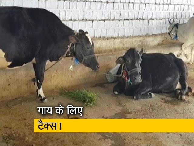 Videos : एमपी: गाय टैक्स लगाने पर विचार कर रही सरकार