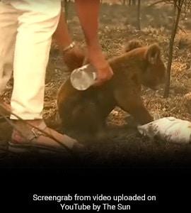 जंगल में लगी थी भीषण आग, महिला ने शर्ट उतारकर ऐसे बचाई इस जानवर की जान, देखें VIDEO