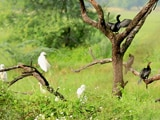 "Video : Sponsored: Bharatpur Bird Sanctuary - A Ride Into The ""Birder's Paradise"""
