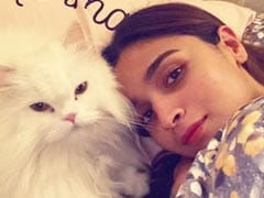 Alia Bhatt's Snuggled-Up Tuesday Summed Up In A 'Purr'fect 'Like Mother Like Cat' Pic
