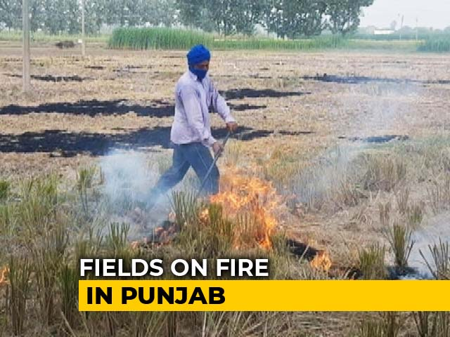 Video : Defying Ban Orders, Farmers Burn Stubble In Punjab Chief Minister's Turf