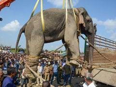"Assam Elephant ""Bin Laden"" Dies After Six Days In Captivity"