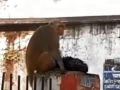 करंट लगने पर अपने बच्चे को पशु अस्पताल लेकर पहुंच गई बंदरिया