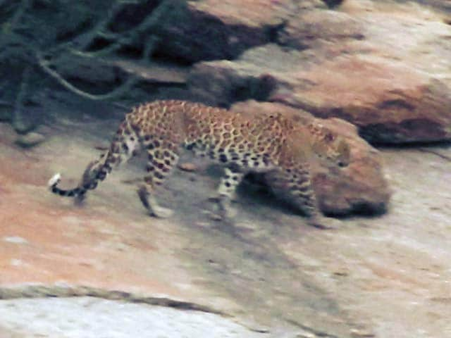 Video : Sponsored: Jawai And Rohet Garh - Rajasthan's New Hotspots For Wildlife Lovers