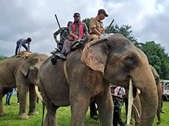 "How Assam MLA Helped Capture ""Laden"", A Rogue Elephant That Killed 5"