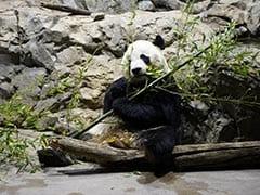 Farewell, Postcards As Washington Prepares To Send Last Panda Cub To China