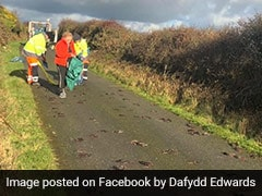 Mystery As Hundreds Of Birds Found Dead On Road