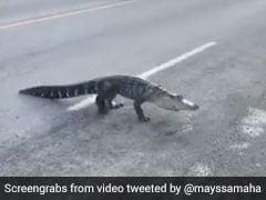 भीड़भाड़ भरे इलाके में सड़कों पर घूमता दिखा घड़ियाल फिर हुआ कुछ ऐसा... देखें Viral Video