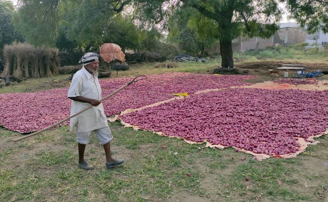 Madhya Pradesh Farmers Stand Guard Over Onion Crops After Theft Cases