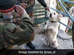 Story Behind Viral Pic Of Dog Saluting Top Army Commander