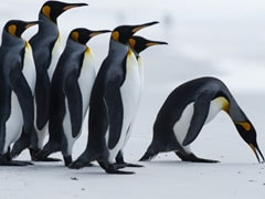 """""""Heart Of The Earth"""": Tourists Flock To Swim Among Penguins In Antarctica"""