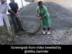 Video : கொச்சியில் 20 கிலோ எடையுள்ள மலைப்பாம்பை பிடித்த பெண்