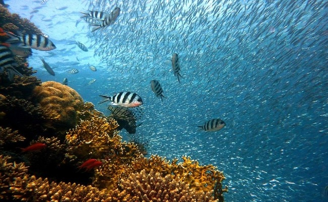 How Scientists Use Loudspeakers To Make Dead Coral Reefs Sound Healthy