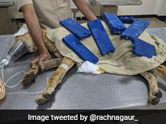 Security Guards In Gurgaon Thrash Street Dog, Attempt To Bury It Alive