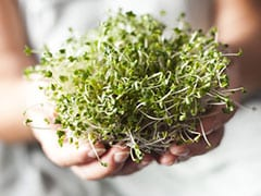 What Are Broccoli Sprouts? Know How They Boost Immunity And Improve Cardiovascular Health
