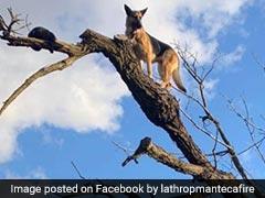 बिल्ली का शिकार करने के लिए पेड़ पर चढ़ गया कुत्ता फिर हुआ कुछ ऐसा, तस्वीरों में देखें...