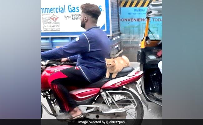 Cat Enjoys Bike Ride In Mumbai, Pics Delight Twitter