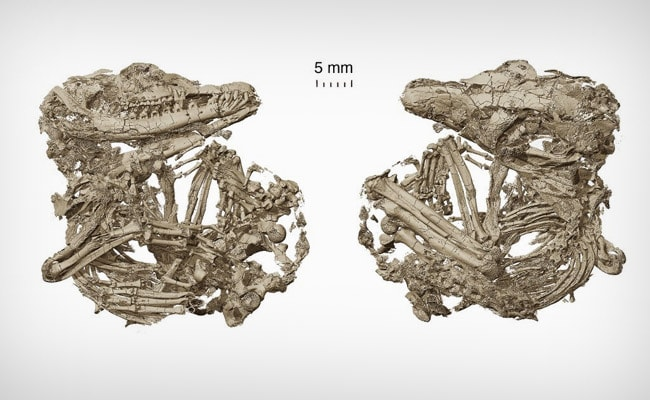 How Mammals Became Good Listeners? New Fossils Reveal
