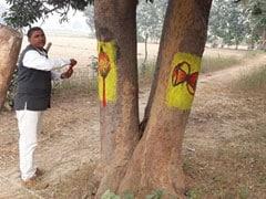 पेड़ों को बचाने के लिए शख्स ने लिया देवी-देवताओं का सहारा, अब लोग काटने की जगह करते हैं पूजा