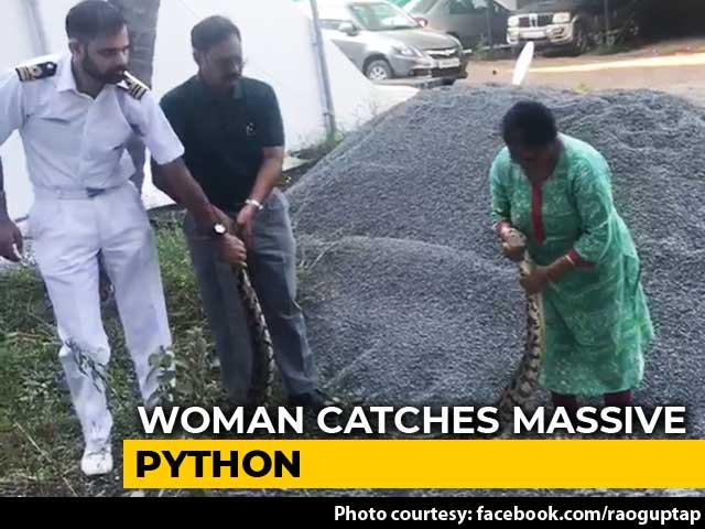 Video : In Hair-Raising Video, Woman Captures 20Kg Python In Kochi