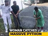 Video : In Hair-Raising Video, Woman Captures 20Kg Python In Kochi