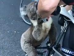 पानी के लिए तड़प रहे Koala ने साइकिल पर आ रही महिला को देख किया ऐसा, देखें दिल छू लेने वाला Viral Video