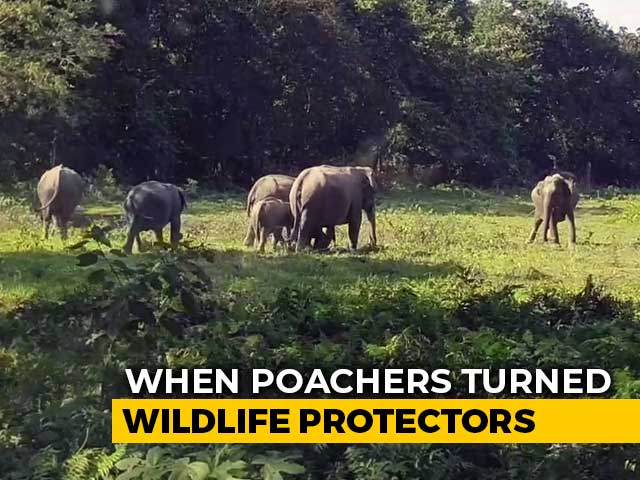 Video : How Poachers Turned Wildlife Protectors In Assam's Manas National Park