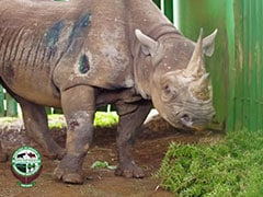 """World's Oldest Rhino"" Fausta Dies In Tanzania At 57"