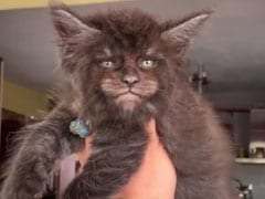 Bizarre Footage Shows Cats That Have Strangely Human Faces