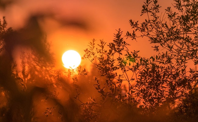 Scorching Heat Sweeps Haryana, Punjab; Narnaul Hottest At 45.8 Degree Celsius