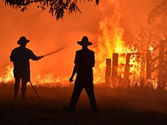 "Sydney Facing ""Public Health Emergency"" Over Bushfire: Doctors"