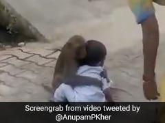 बंदर को इस बच्चे पर आया इतना प्यार, मां खींचती रही लेकिन जाने नहीं दिया, बॉलीवुड एक्टर ने शेयर किया Video