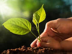 World Soil Day 2019: Facts On Soil Erosion And How We Can Stop It