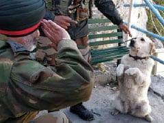 आर्मी अफसर आए सामने तो कुत्ते ने तुरंत मारा सैल्यूट, फिर हुआ कुछ ऐसा... देखें खूबसूरत Photo