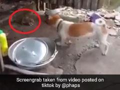TikTok Top 5: कुत्ते ने किया Attack तो चूहे ने हवा में उड़कर किया वार, देखें Viral Video