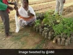 Chhattisgarh Forest Department Reuses Plastic Bottles To Grow Plants