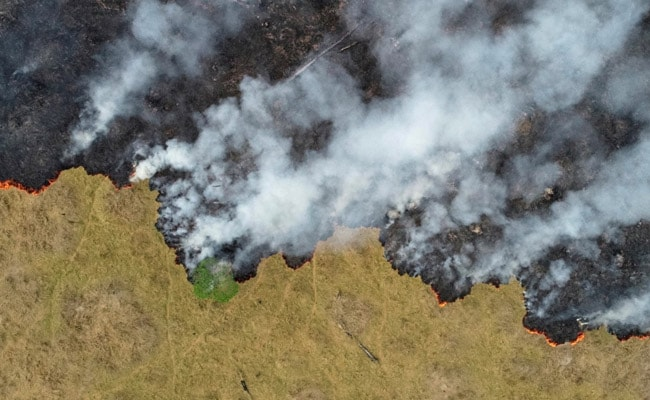 Amazon Deforestation Jumps 100% In November Over Same Month Last Year