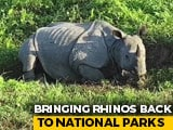 Video : Assam Aims To Have 3,000 Rhinos By Next Year, Manas Park Leads The Way