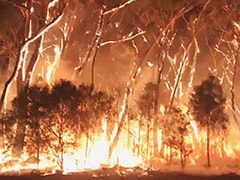 "Australia Braces For Bushfires As Strong Winds Create ""Severe"" Conditions"